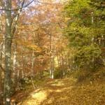 chemin automne