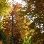 balade automne