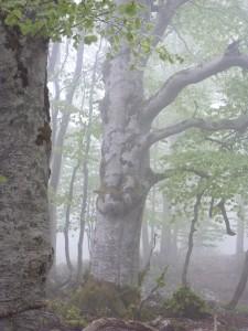 légende d'arbre