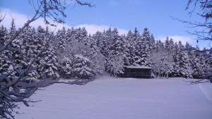 clairière de neige